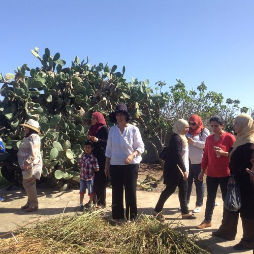 THM femmes semencieres en Tunisie